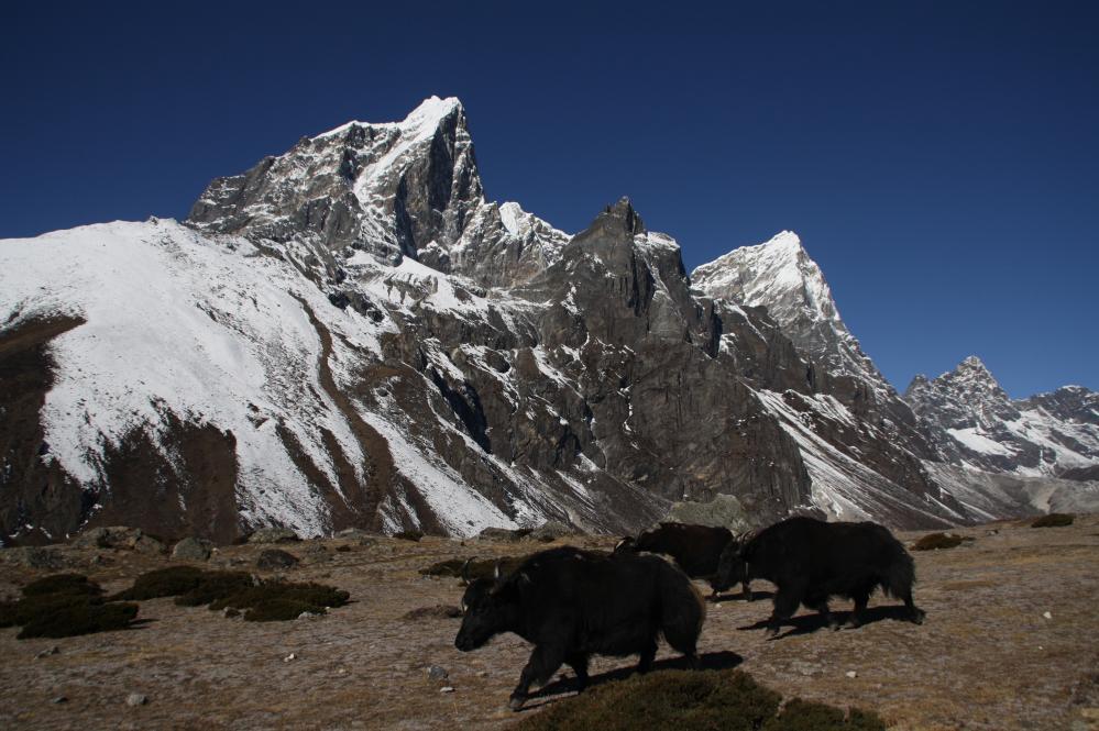 Treks en Himalaya